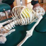 内臓の働きが背骨に出る